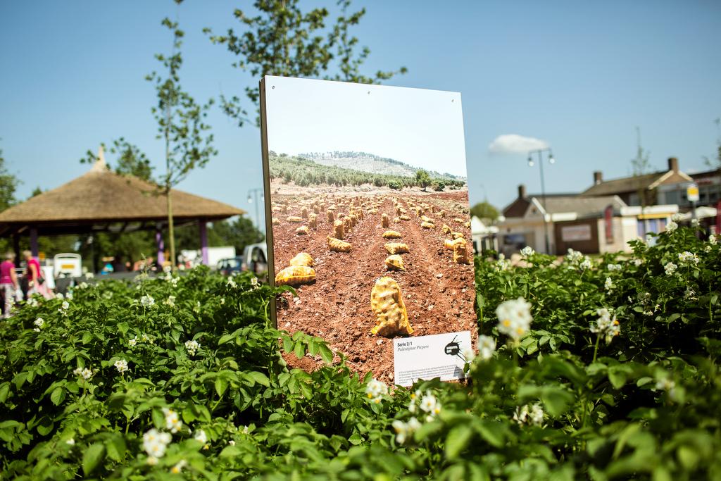 Photo: Dirk-Jan Visser / Borger  / The Netherlands / 07-08-2015: Vervanging van de tentoonstelling het Aardappelcafe. De groei van de aardappel wordt vervangen voor voor de internationalisering van de Nederlandse aardappel naar Palestina.