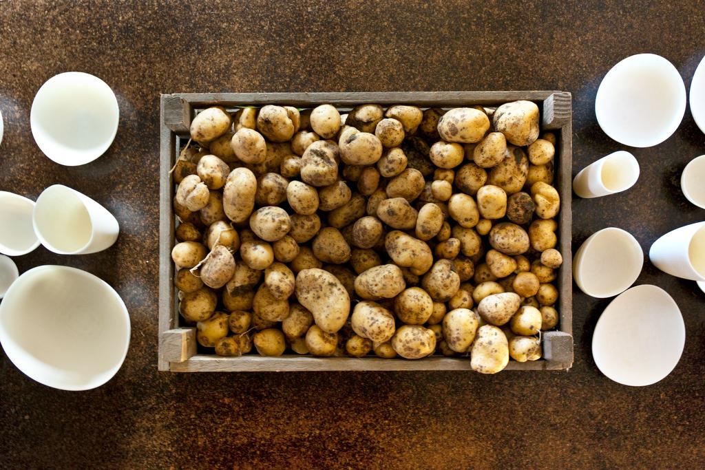 Patatafeest aan de Middendijk, de launch van het patata project en het oogsten